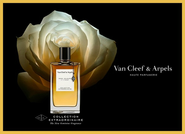 rose velours van cleef arpels