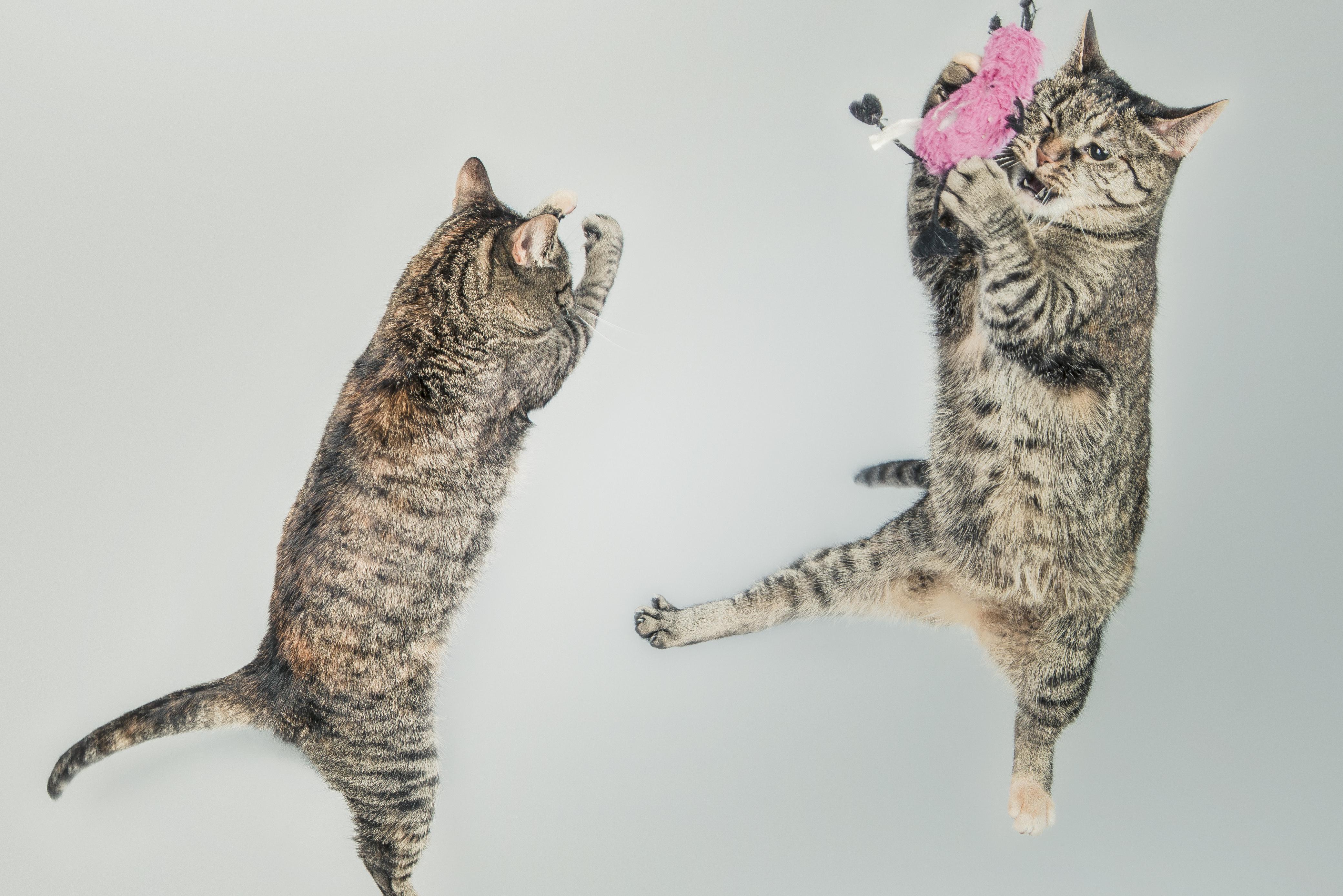 cats-perfume-wishlist